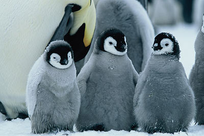 March of the Penguins image